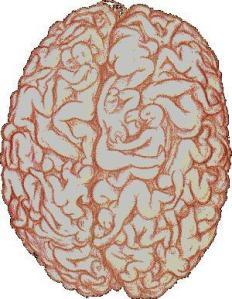 brain sex!