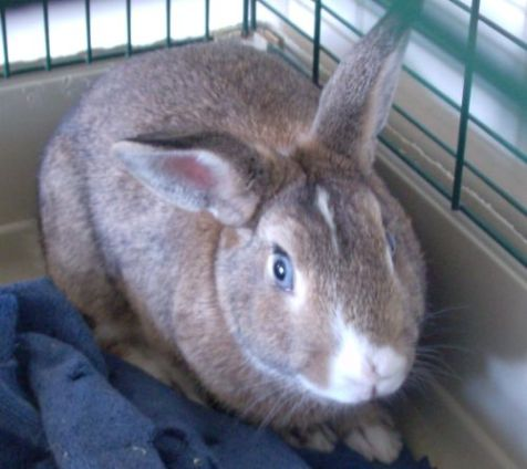 A Bunny! A Bunny named Brutus!